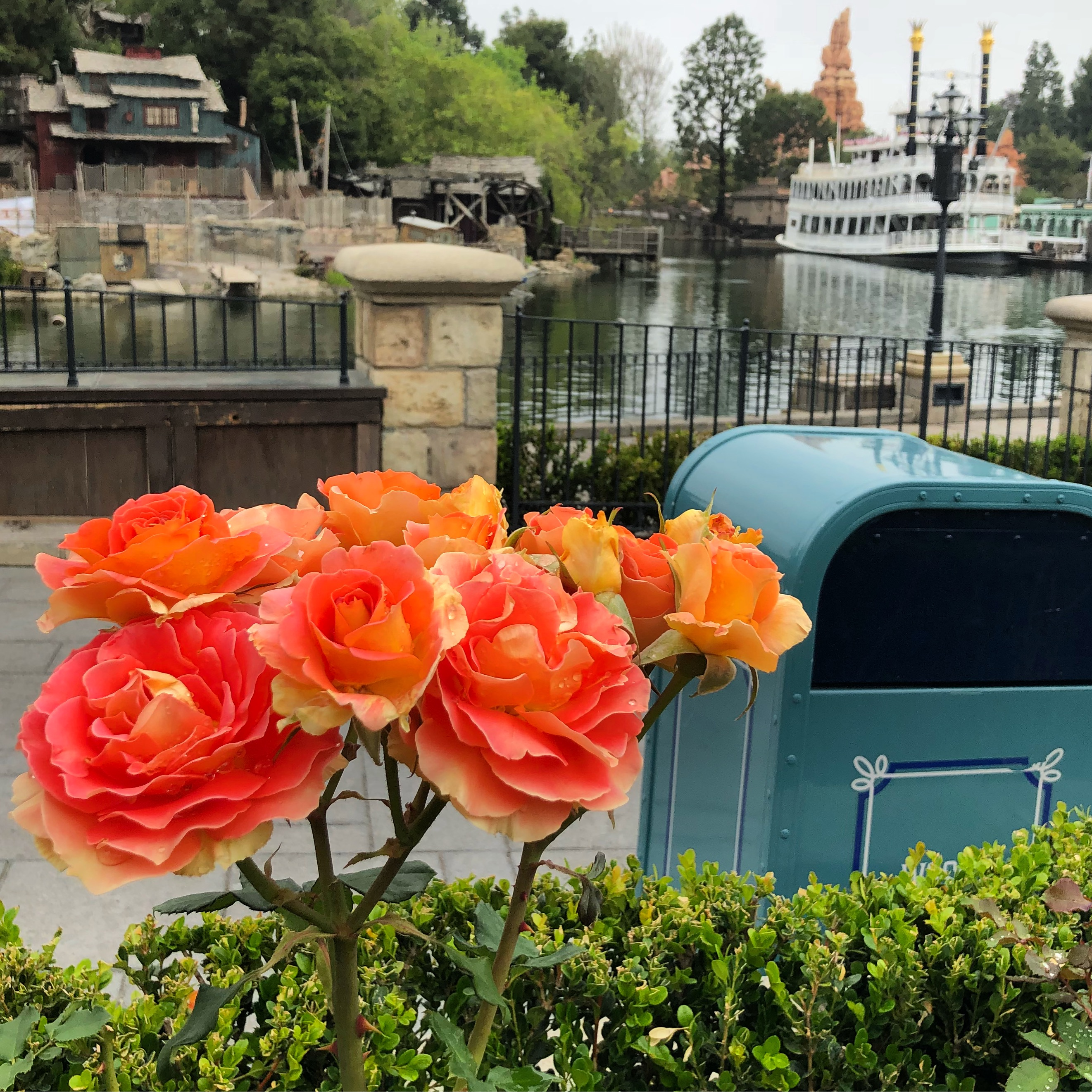 Flowers along the Rivers of America in New Orleans Square, Disneyland USA
